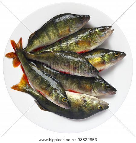 European Perch Fish On Plate.