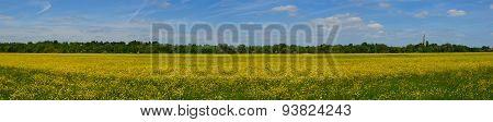 Hemmingford water meadow covered in wild flowers.
