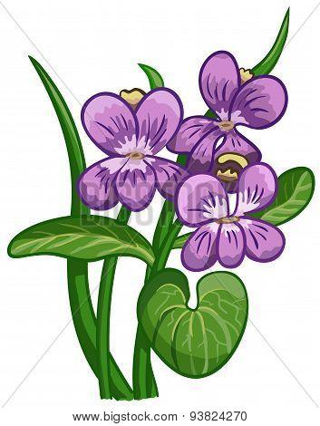 Blooming Violet.