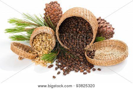 Cedar Pine Nuts