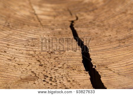 Round Wood Grain In Tree Stump