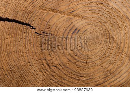 Round Wood Grain In Tree Stump