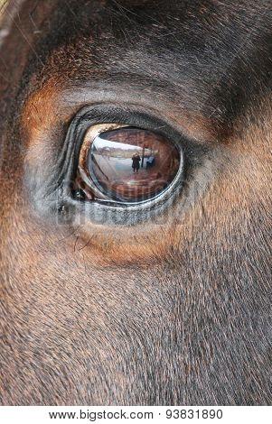 close-up of horses eye
