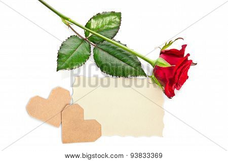 Red Rose With Valentine And Blank Gift Card For Text On White Background