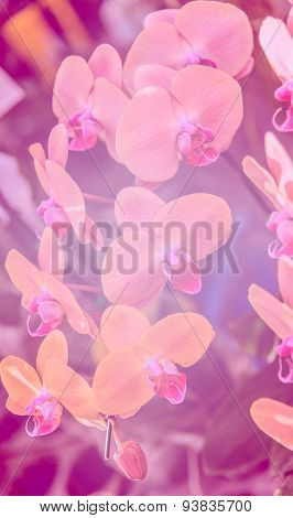Natural Sweet Color Orchid In Soft Color And Blur Style