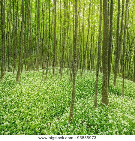 Deep Forest.