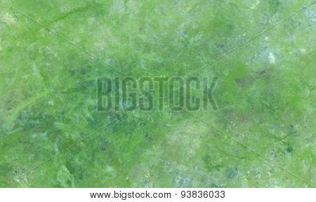 Background Blurred Algae