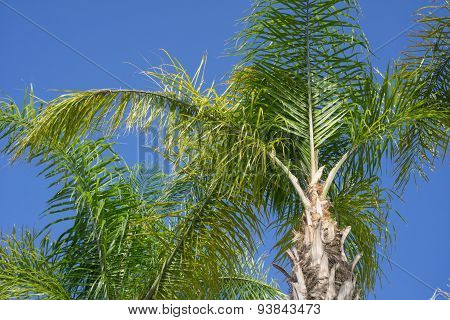 Paradise Of Palm Fronds