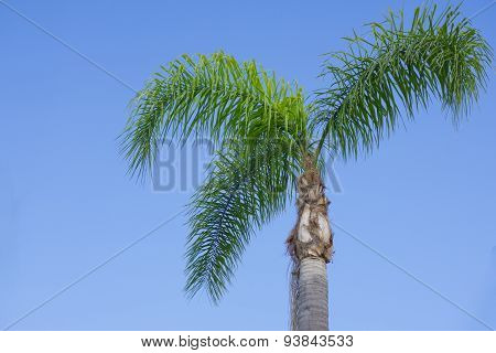 Three Palm Tree Fronds