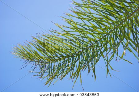 Palm Frond Bends In Wind