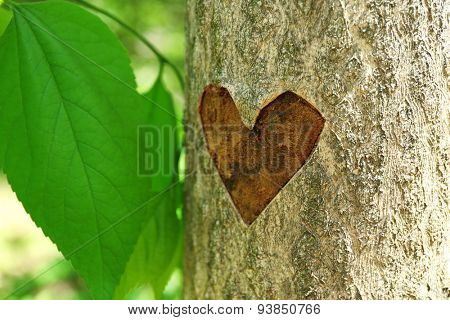 heart carved in tree close up