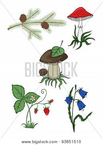 Plants from the forest