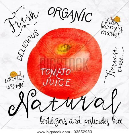 Watercolor tomato