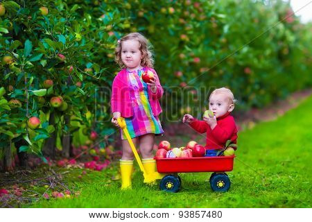 Kids Picking Apple On A Farm