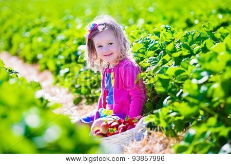 Little Girl Picking Strawberry On A Farm