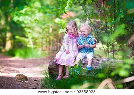 Kids Watching A Hedgehog In The Forest
