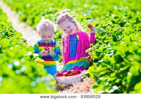 Kids Picking Fresh Strawberry On A Farm