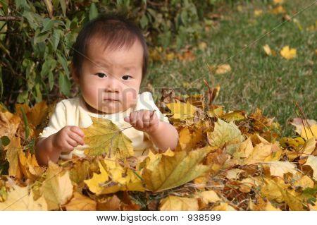 Cute Asian Baby In Pile Of Leaves