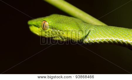 Close up of little green snake on tree branch in the forest.