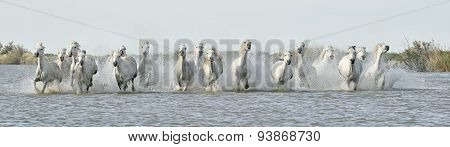 Running White Horses Through Water