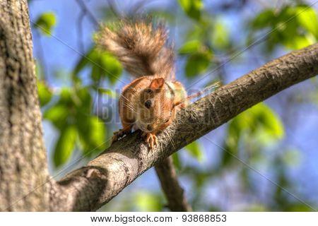Portrait Of A Curious Squirrel