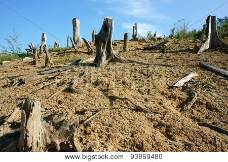 Deforestation, Stump, Change Climate, Living Environment