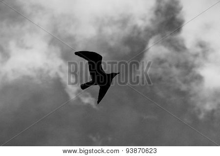 Seagull Silhouette Flying