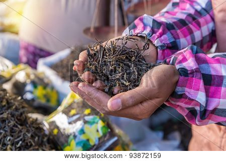 Organic Green Tea Dry Process After Picked On Hand In Market