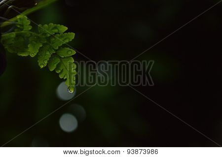 drop of waters from fern leaf
