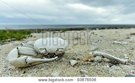Dead crab on a sandy shore