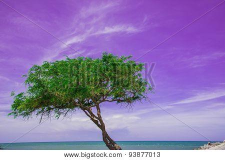 Green Sea Sand Sun