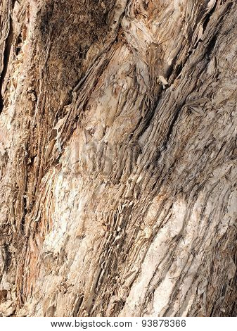 Rough Paper Bark Gum tree bark