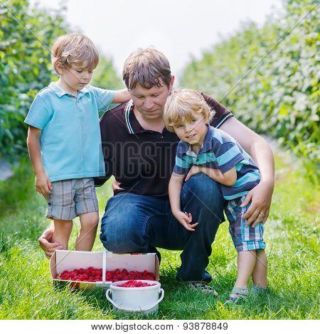 Two Little Twins Kid Boys And Their Dad On Organic Raspberry Farm