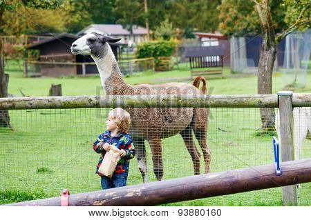 Kid Boy With Glasses Feeding Lama On An Animal Farm