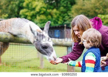 Kid Boy And His Mother Feeding Lama On An Animal Farm