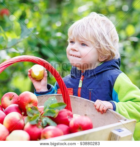 Toddler Boy Sitting In Wooden Trolley With Red Apples