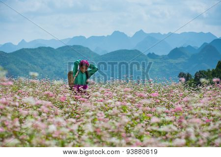 A ethnic minority girl in a buckwheat flower field