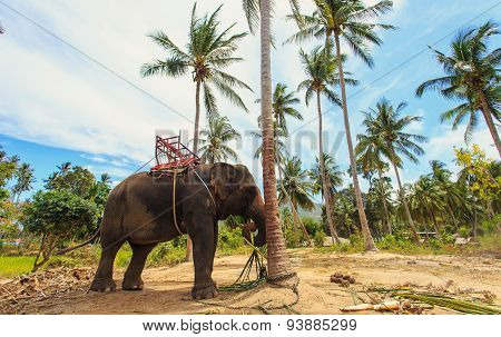 Thai Elephant With Bench For Trekking