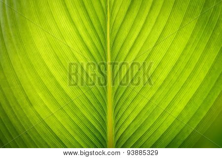Green Leave Texture For Background