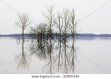 Trees in flooded field