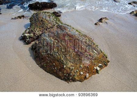 Seagrass and seashells