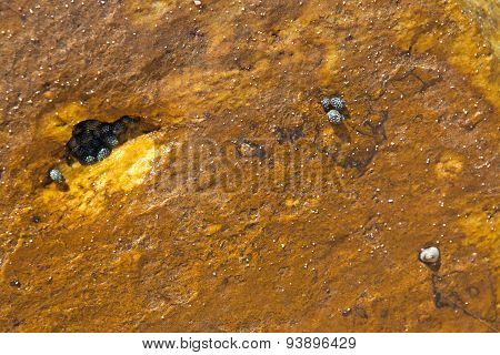 Small mollusks habitat