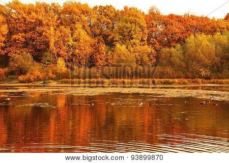 Autumn On Lake. Trees In Yellow Foliage On Banks Of Pond