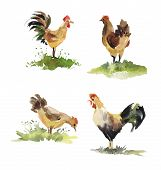 picture of roosters  - Set of chicken and rooster watercolor - JPG