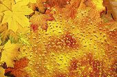 foto of rainy season  - Frame from vivid colorful wet autumn leaves - JPG