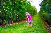 foto of apple orchard  - Child picking apples on a farm - JPG