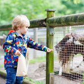 picture of baby goat  - Cute blond kid boy feeding goats on an animal farm - JPG