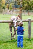 picture of lamas  - Happy little blond kid boy feeding big lama on an animal farm - JPG