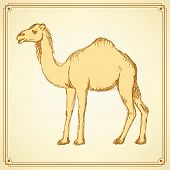 stock photo of hump day  - Sketch cute camel in vintage style vector - JPG