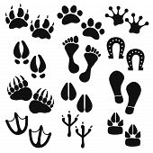 picture of hoof prints  - Traces of animals birds people - JPG